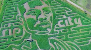Damian Lillard corn maze at Bella Organics