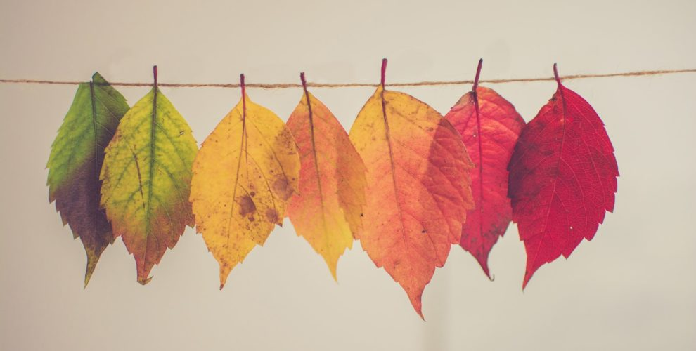 Collection one fall leaves hanging from a clothesline